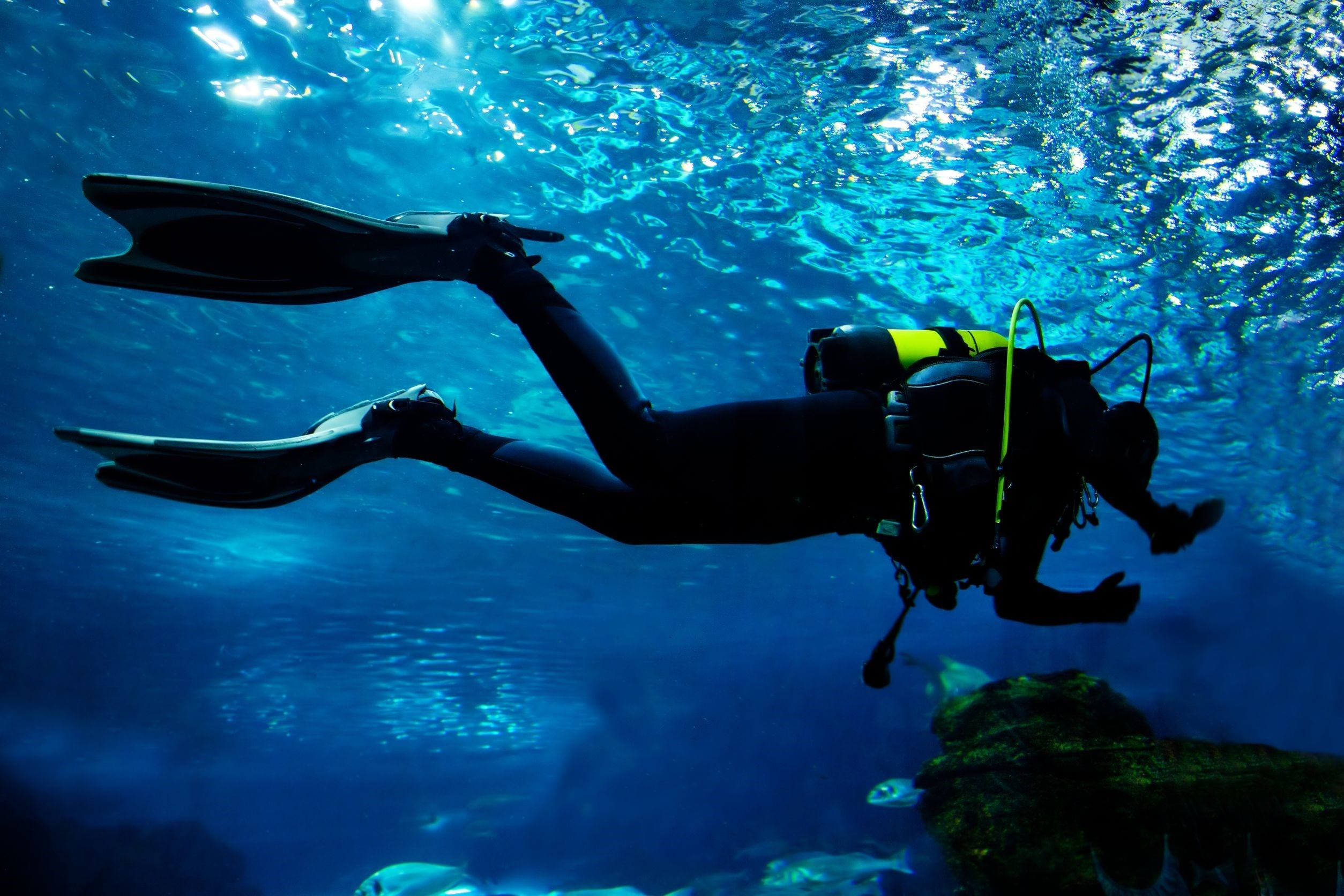 How Safe Is Scuba Diving And What Can You Do If You're Hurt